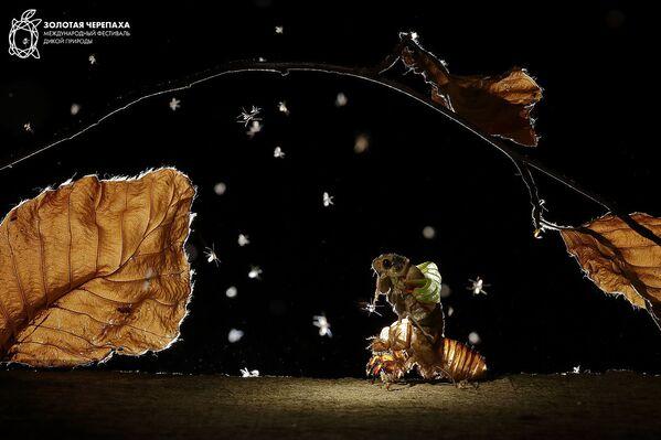 Снимок Сказка на ночь фотографа Балинта Винже, занявший второе место в номинации Микромир фотоконкурса The Golden Turtle 2018 - Sputnik Азербайджан