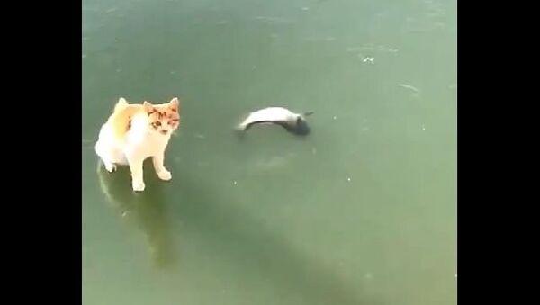 Кот и рыба во льду - Sputnik Азербайджан