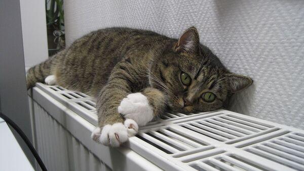 Кот на батарее отопления, фото из архива - Sputnik Азербайджан