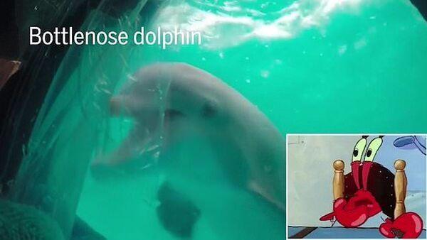 Дельфины любят смотреть телевизор - Sputnik Азербайджан