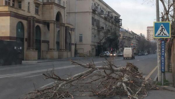 Сильный ветер в Баку повредил деревья - Sputnik Азербайджан