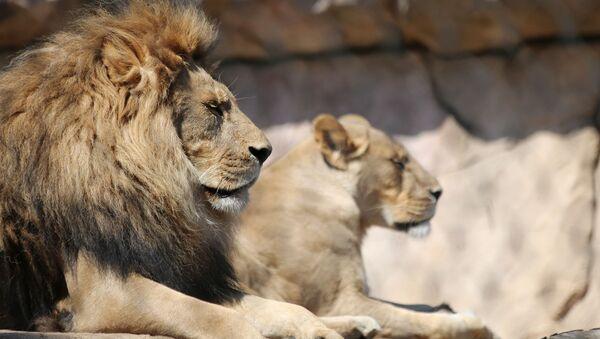Бакинский зоопарк закрылся на ремонт