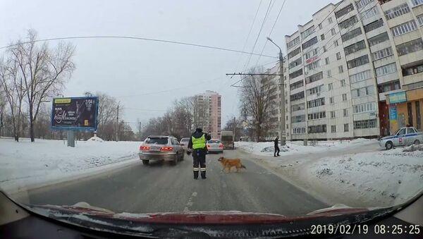 Сотрудник ДПС перевел через дорогу хромого пса - Sputnik Азербайджан