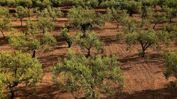 Посадка новых деревьев - Sputnik Азербайджан