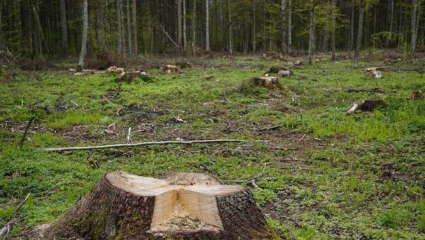 Вырубленные деревья, фото из архива - Sputnik Азербайджан