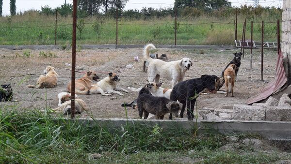 Ферма в селе Йергюдж для бездомных собак - Sputnik Azərbaycan