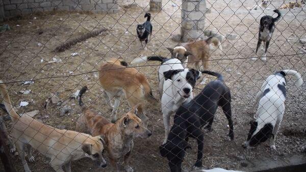 Ковчег для бездомных собак: как сестры из Хачмаза спасают животных - Sputnik Азербайджан