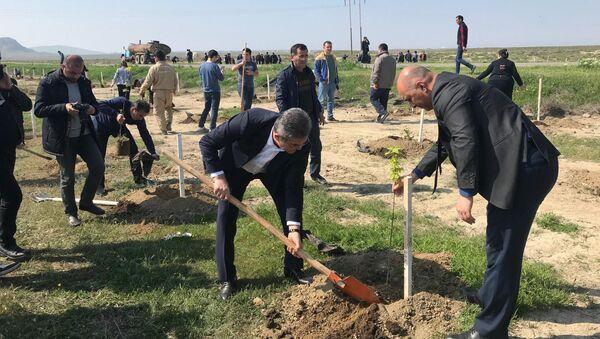 В Гобустанском заповеднике прошла массовая акция по посадке деревьев - Sputnik Азербайджан