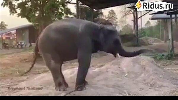 Танцующий слоненок Таиланд - Sputnik Азербайджан