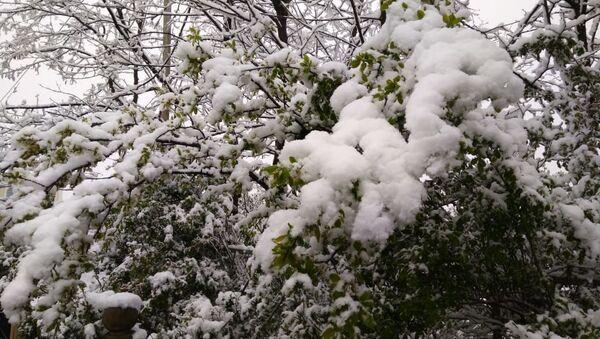 В Лерикском районе Азербайджана выпал снег - Sputnik Азербайджан