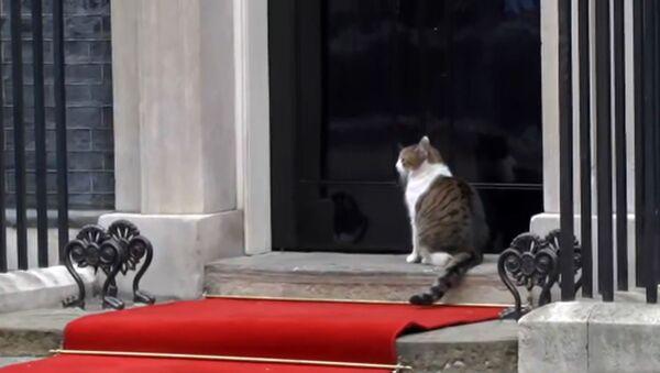 Как кошка на Даунинг-стрит прогуливалась по красной дорожке Трампа - Sputnik Азербайджан