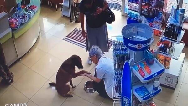 Доброе видео: раненый пес пришел в аптеку попросить о помощи - Sputnik Азербайджан
