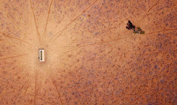 Одинокое дерево стоит рядом с поилкой для скота на выгоне, пострадавшем от засухи - Sputnik Азербайджан