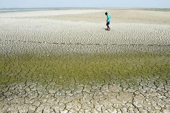 Индийский юноша в поисках грязевых крабов и змееголовых рыб идет по пересохшему руслу озера Чембарамбаккам  - Sputnik Азербайджан