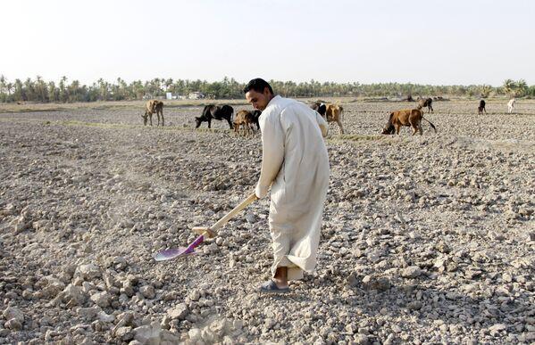 Пострадавшие от засухи районы центрального Ирака - Sputnik Азербайджан