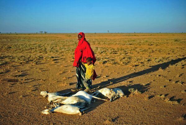 Женщина с ребенком проходят мимо стада мертвых коз в засушливой местности недалеко от Дахара в Пунтленде - Sputnik Азербайджан