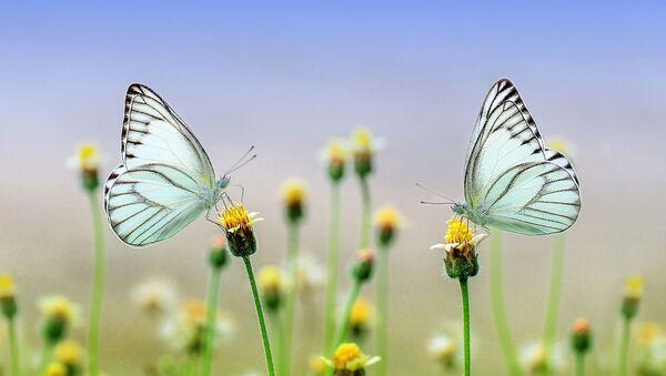 Бабочки - Sputnik Азербайджан