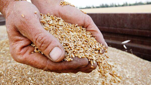 Зерна пшеницы, фото из архива - Sputnik Азербайджан