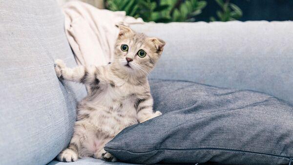 Кошка, фото из архива - Sputnik Азербайджан