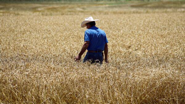 Фермер, фото из архива - Sputnik Азербайджан