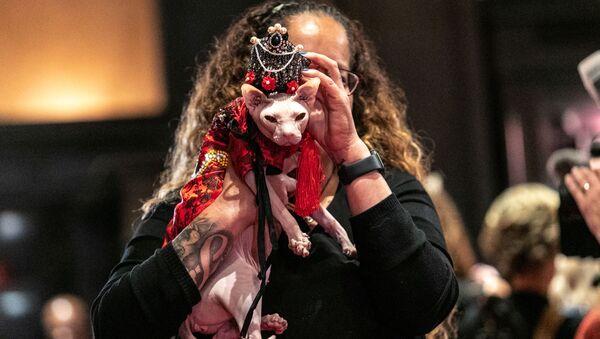 Высокая мода в Нью-Йорке: кошки вышли на дефиле в национальных костюмах - Sputnik Азербайджан