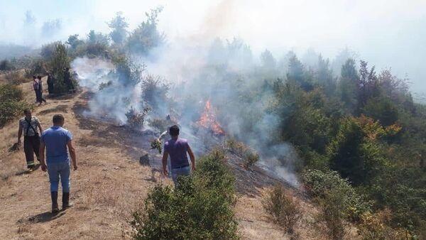 На территории Гирканского национального парка начался пожар - Sputnik Азербайджан