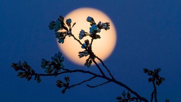 Луна, фото из архива - Sputnik Азербайджан