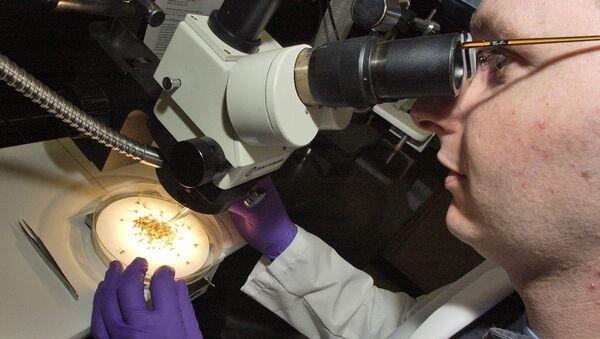 Комариный вирусный энцефалит под микроскопом, фото из архива - Sputnik Азербайджан