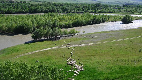Пастбище овец в окрестностях реки Куры в Грузии, фото из архива - Sputnik Азербайджан