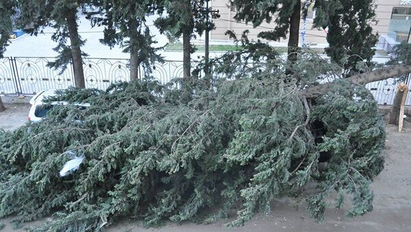 Aşmış ağac - Sputnik Азербайджан