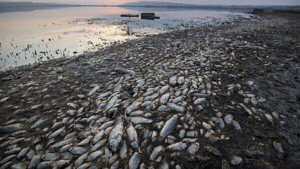 Ölü balıqlar, arxiv şəkli - Sputnik Азербайджан