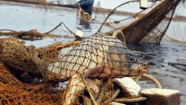 Улов рыбы, фото из архива - Sputnik Азербайджан