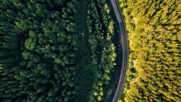 Лес вдоль магистрали, фото из архива - Sputnik Азербайджан