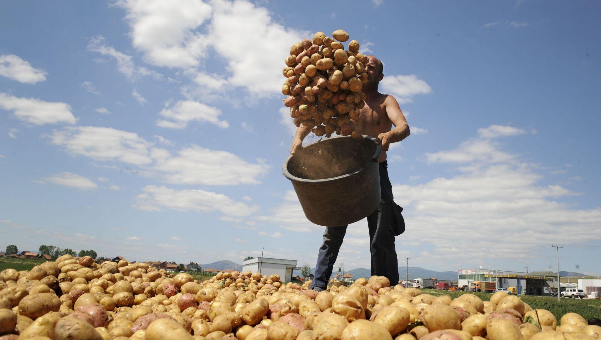 Урожай картофеля - Sputnik Azərbaycan, 1920, 22.07.2021