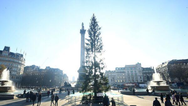 Главная елка на Трафальгарской площади в Лондоне - Sputnik Азербайджан