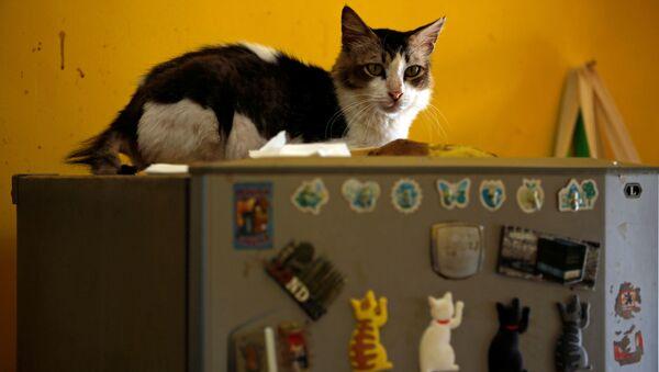 Кот на холодильнике в кошачьем приюте в Индонезии  - Sputnik Азербайджан