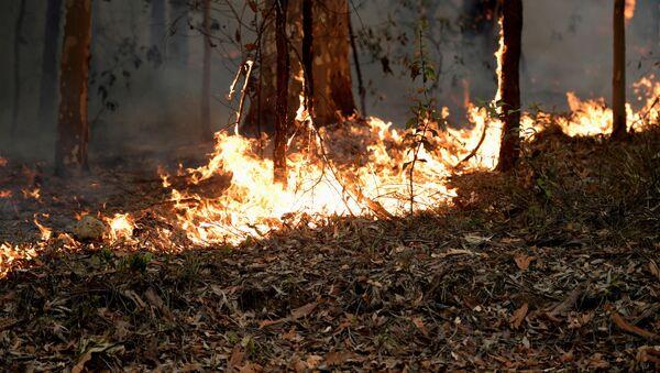 Лесные пожары в Австралии - Sputnik Азербайджан