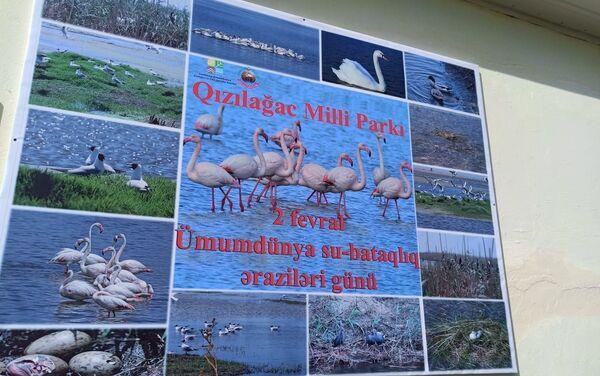 Мероприятие в национальном парке «Гызылагадж»  - Sputnik Азербайджан