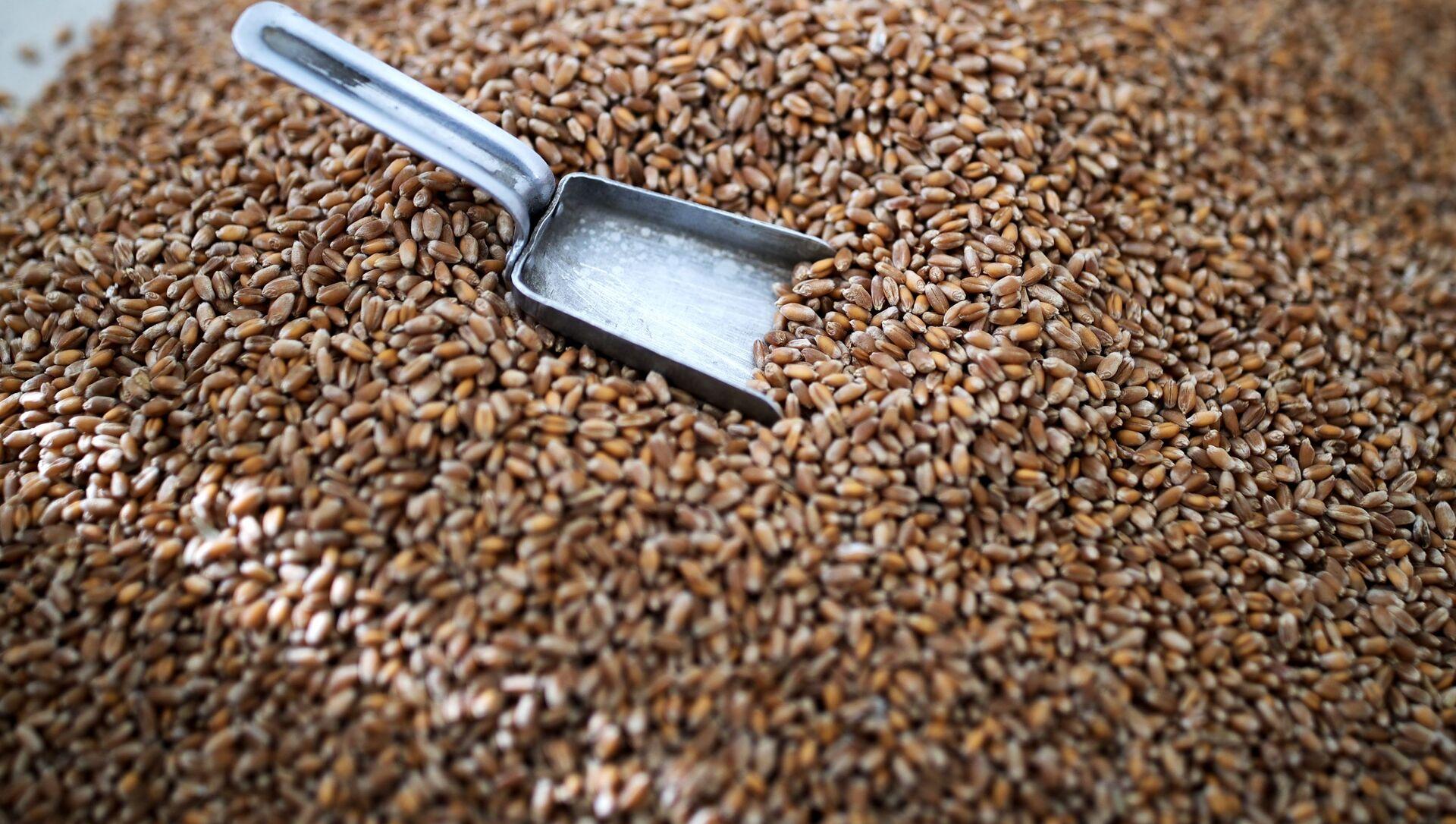 Зерно пшеницы, фото из архива - Sputnik Азербайджан, 1920, 15.03.2021