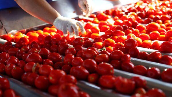 Переработка помидоров, фото из архива - Sputnik Азербайджан