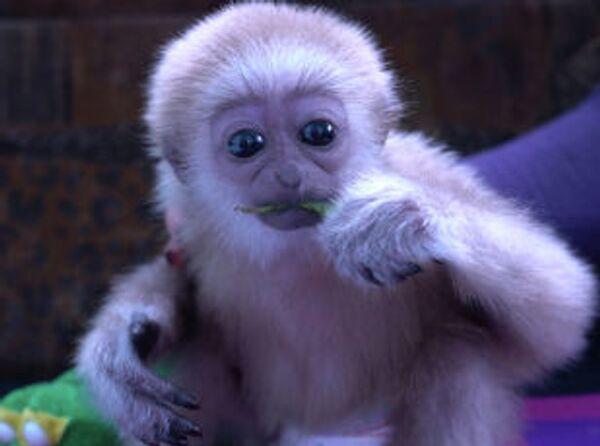 Забавная обезьянка обитает в зоопарке Алматы - Sputnik Азербайджан