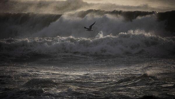 Чайка летает над морем во время шторма, фото из архива - Sputnik Азербайджан