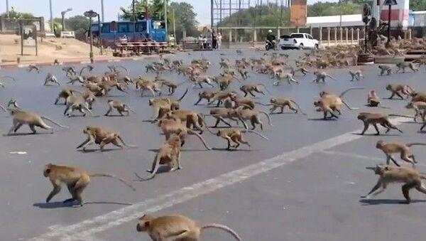 Массовая драка обезьян в опустевшем из-за коронавируса Таиланде  - Sputnik Азербайджан