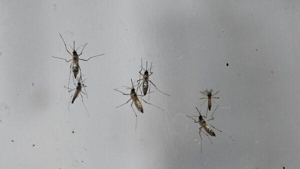 Комар, фото из архива - Sputnik Азербайджан
