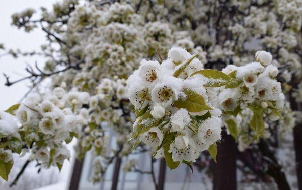 Снегопад в Габале - Sputnik Азербайджан