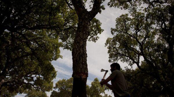 Вырубка дерева, фото из архива - Sputnik Азербайджан