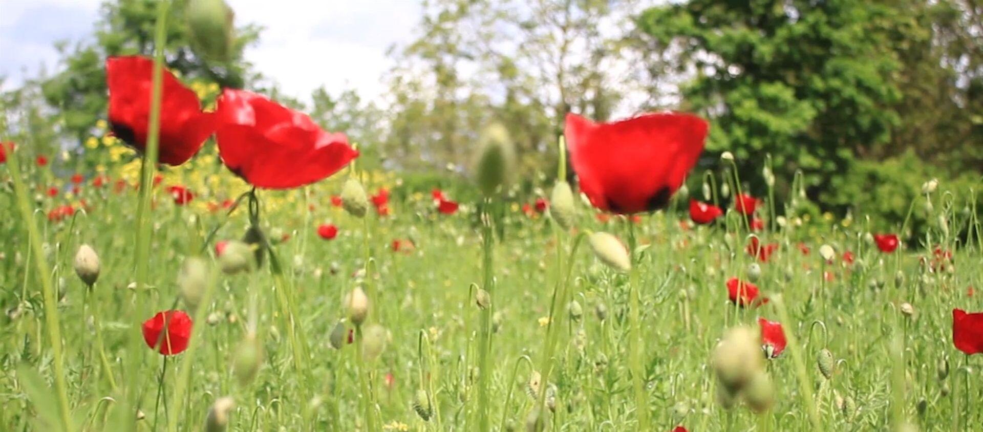 Где-то вовсю цветет весна: путешествие в регионы Азербайджана - Sputnik Азербайджан, 1920, 25.04.2020