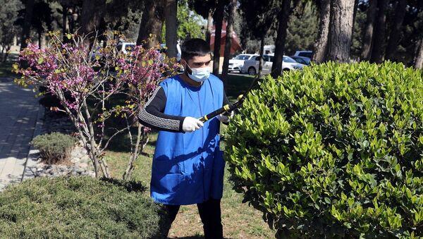 Parkda ağacları budayan gənc - Sputnik Азербайджан