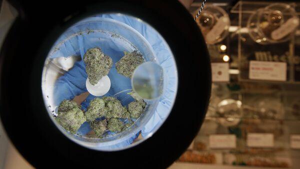 Образцы марихуаны под лупой, фото из архива - Sputnik Azərbaycan