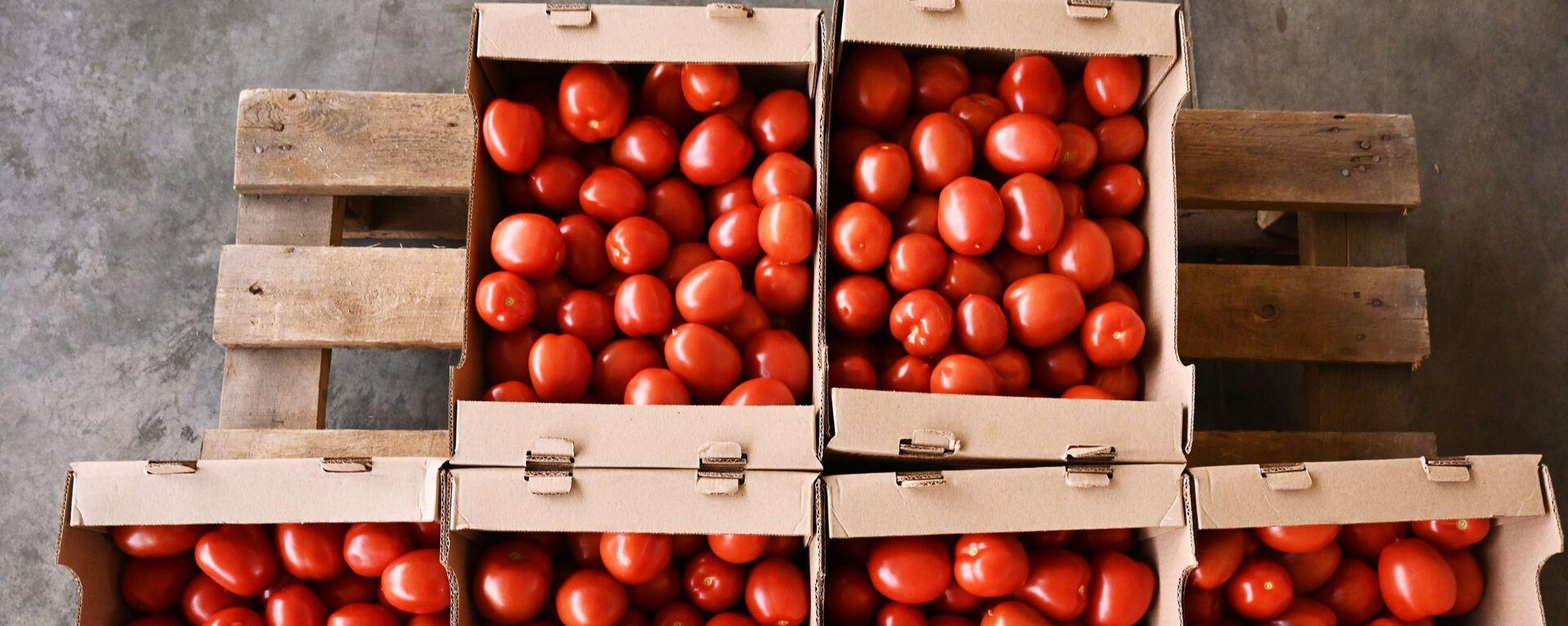 Урожай томатов, фото из архива - Sputnik Азербайджан, 1920, 13.09.2021
